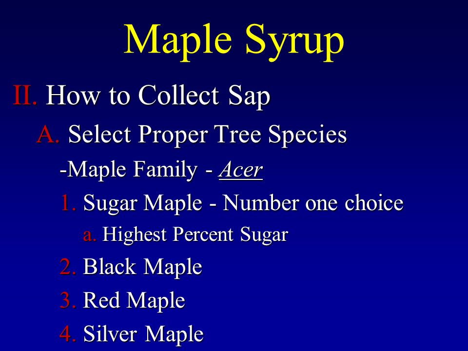 II. How to Collect Sap A. Select Proper Tree Species -Maple Family - Acer 1.