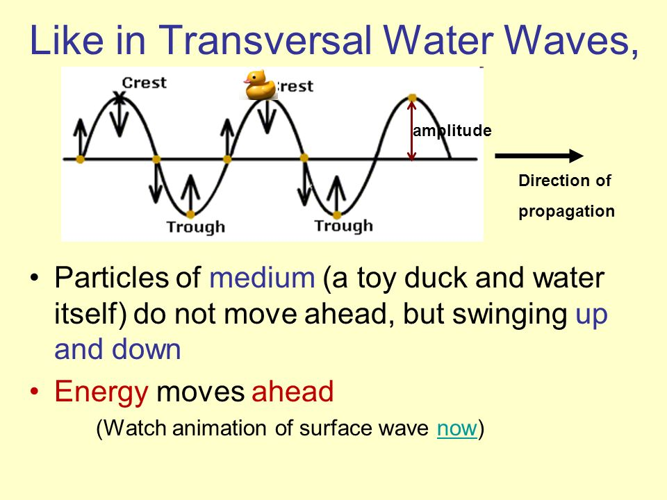 Like in Transversal Water Waves, Particles of medium (a toy duck and water itself) do not move ahead, but swinging up and down Energy moves ahead (Wat