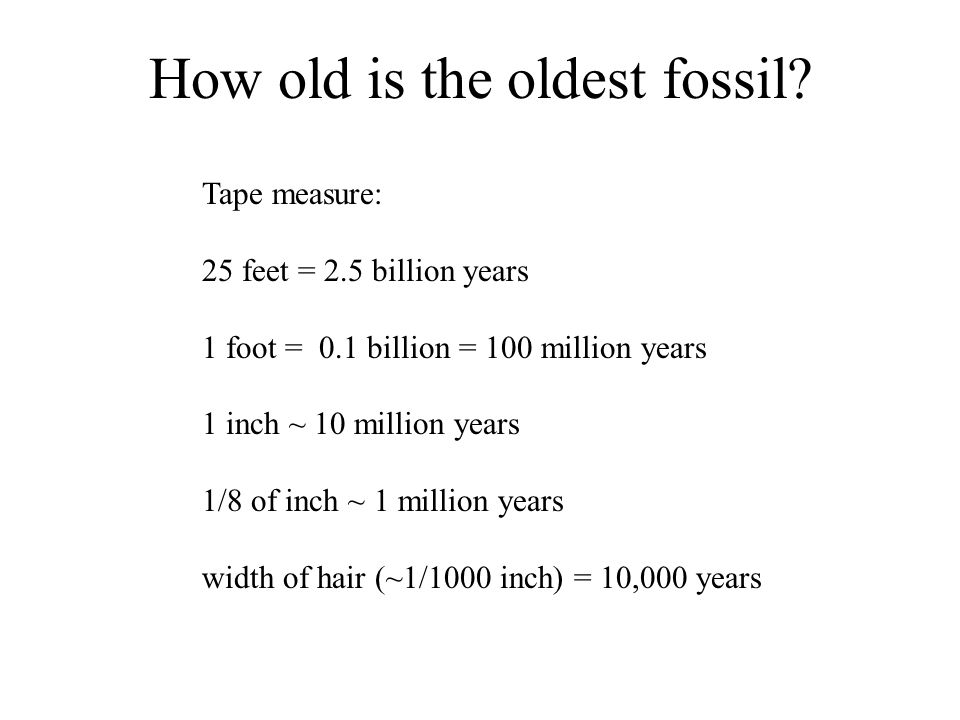 How old is the oldest fossil.
