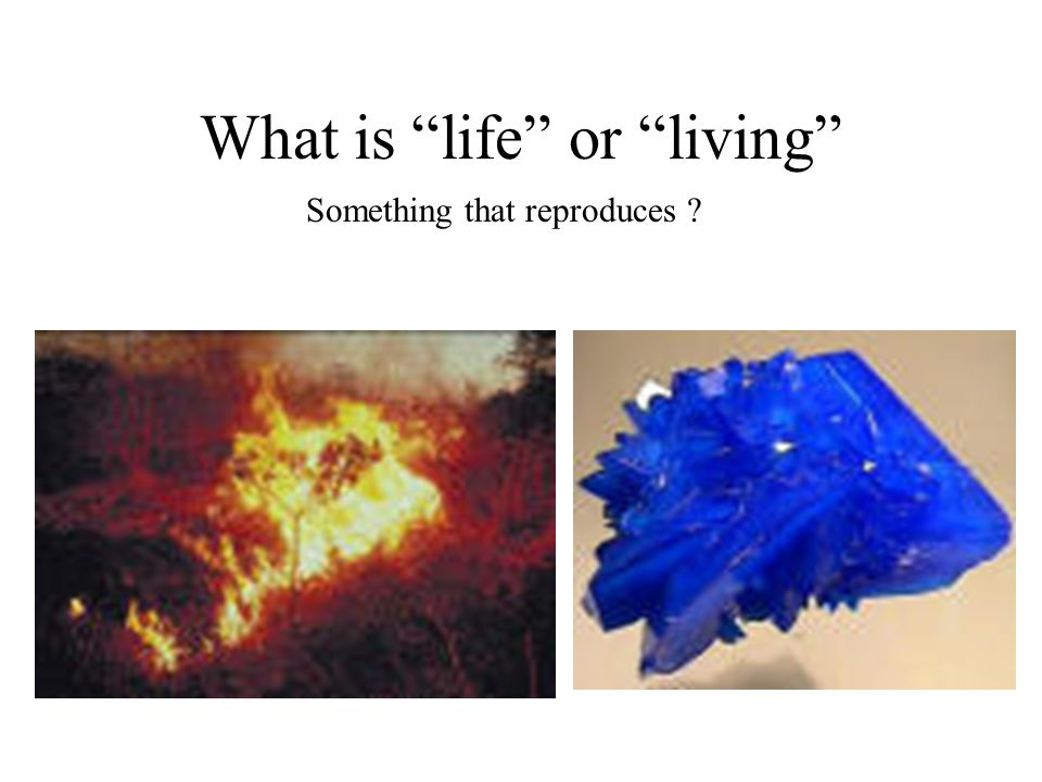 What is life or living Something that reproduces ?