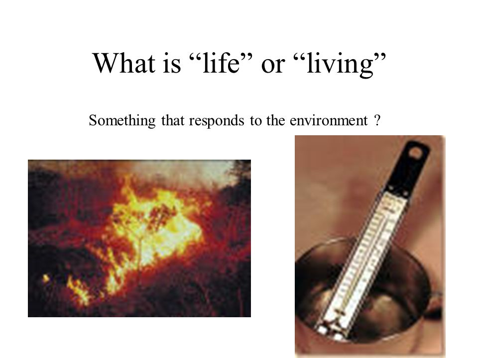 What is life or living Something that responds to the environment ?
