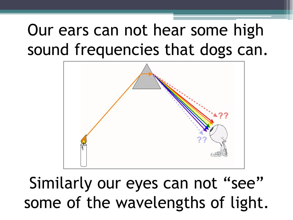 Our ears can not hear some high sound frequencies that dogs can. Similarly our eyes can not see some of the wavelengths of light.