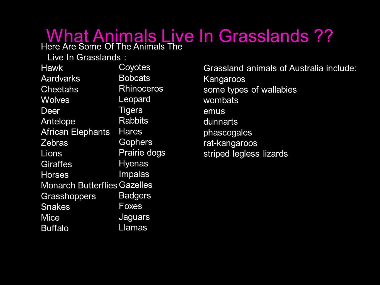 What Animals Live In Grasslands .