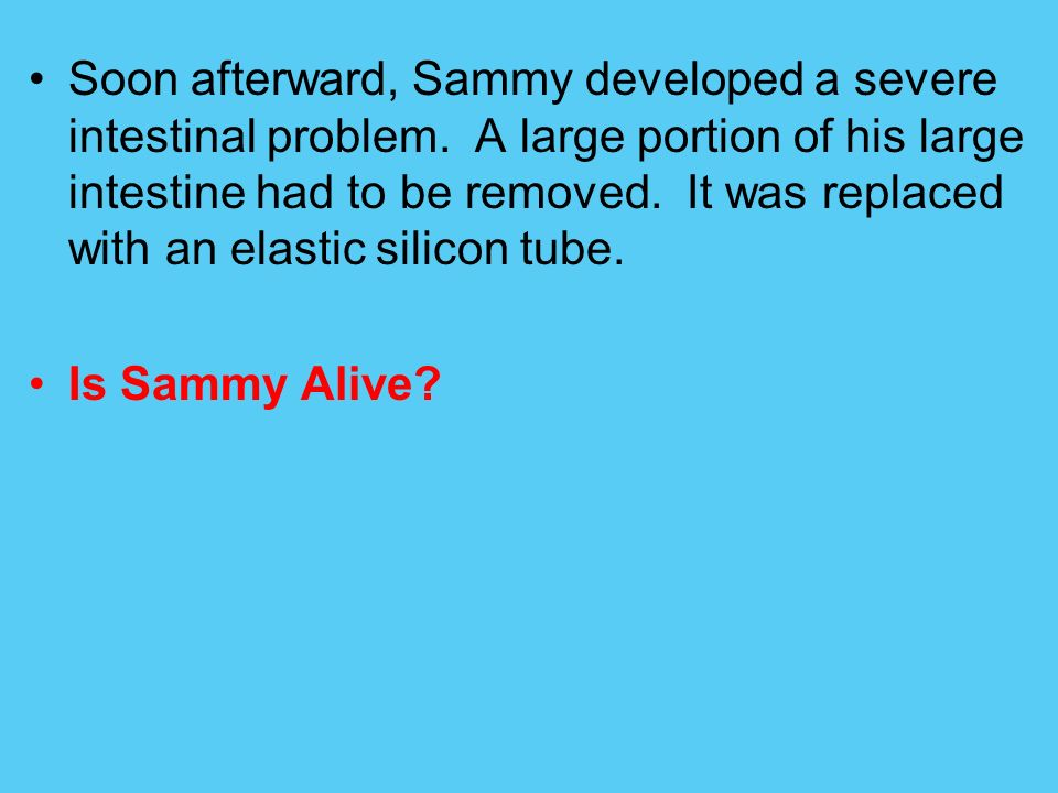 Soon afterward, Sammy developed a severe intestinal problem. A large portion of his large intestine had to be removed. It was replaced with an elastic