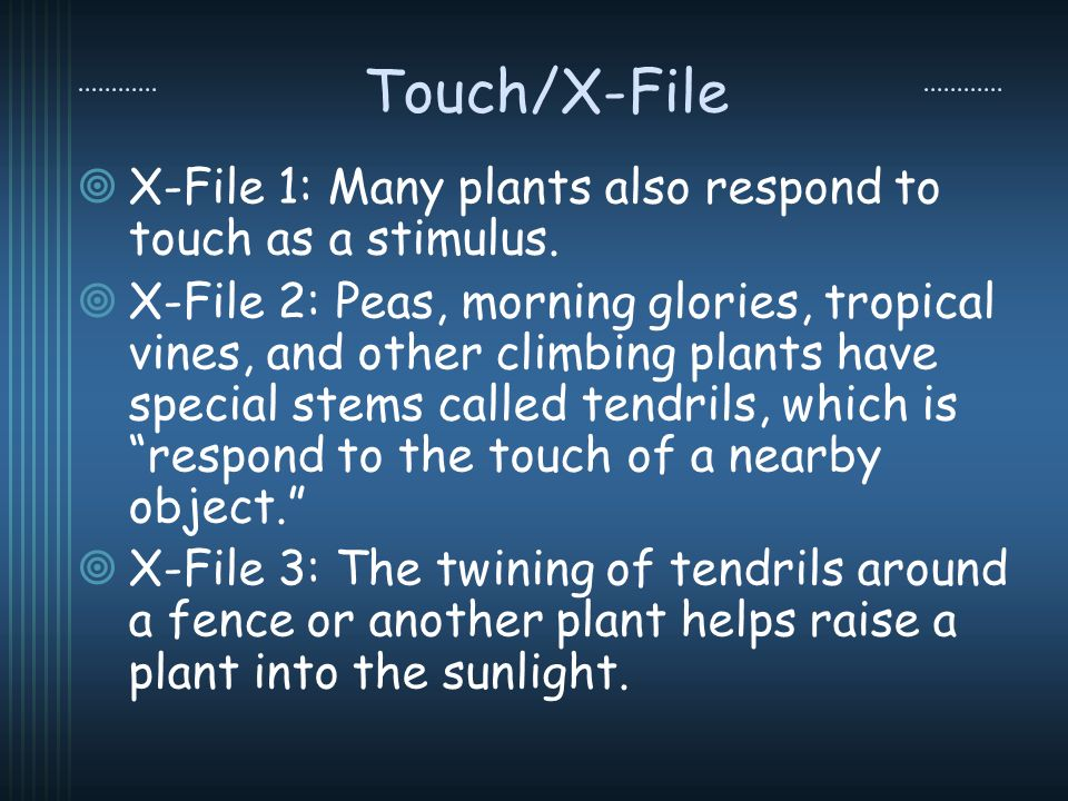 Touch/X-File X-File 1: Many plants also respond to touch as a stimulus. X-File 2: Peas, morning glories, tropical vines, and other climbing plants hav