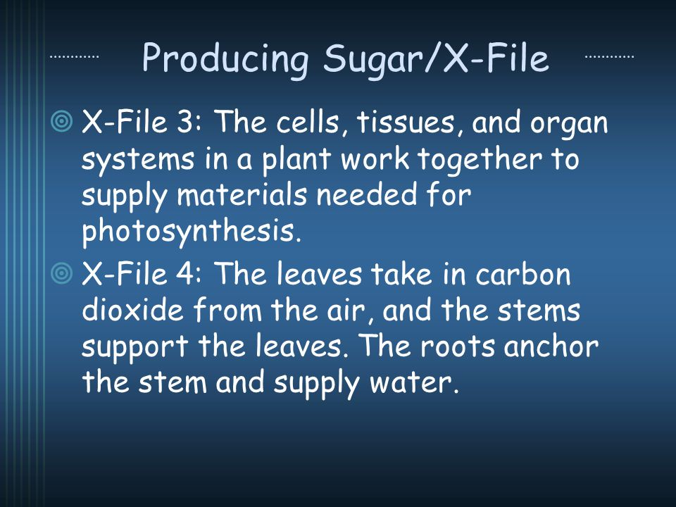Producing Sugar/X-File X-File 3: The cells, tissues, and organ systems in a plant work together to supply materials needed for photosynthesis. X-File