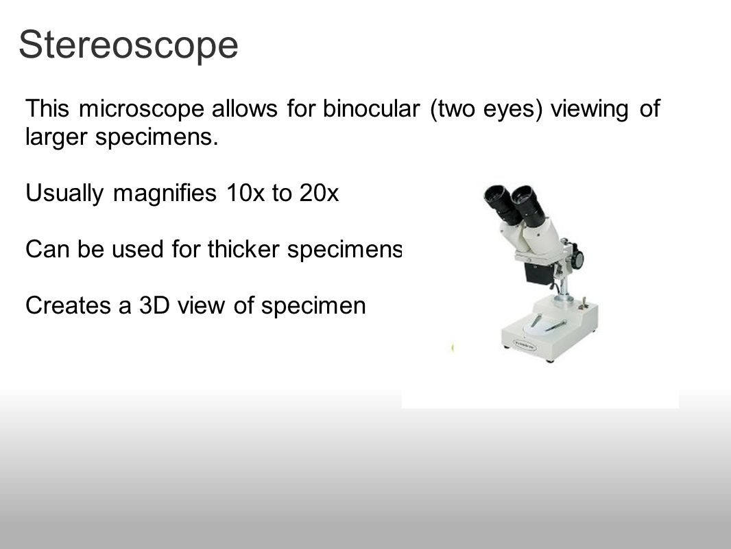 Stereoscope This microscope allows for binocular (two eyes) viewing of larger specimens. Usually magnifies 10x to 20x Can be used for thicker specimen