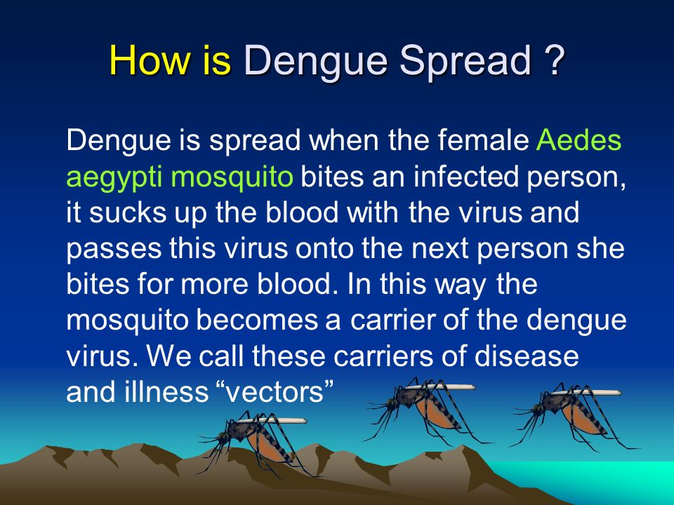 How is Dengue Spread ? Dengue is spread when the female Aedes aegypti mosquito bites an infected person, it sucks up the blood with the virus and pass