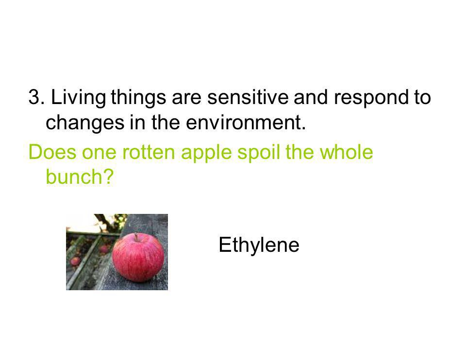3. Living things are sensitive and respond to changes in the environment. Does one rotten apple spoil the whole bunch? Ethylene