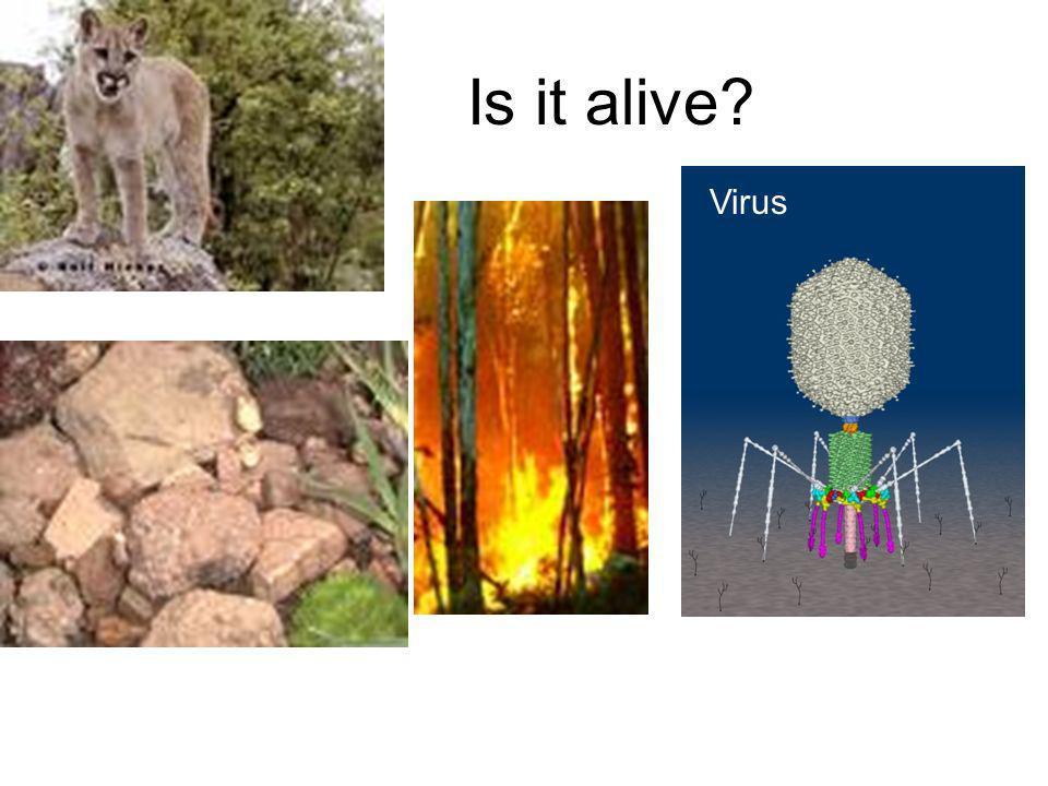 Is it alive? Virus
