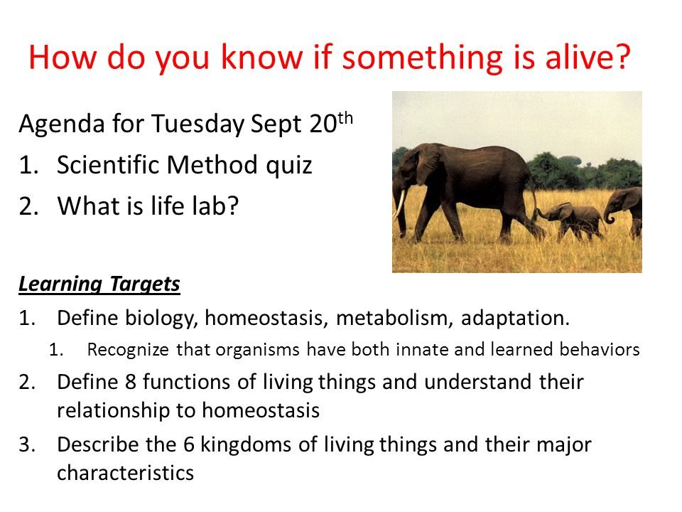 How do you know if something is alive? Agenda for Tuesday Sept 20 th 1.Scientific Method quiz 2.What is life lab? Learning Targets 1.Define biology, h