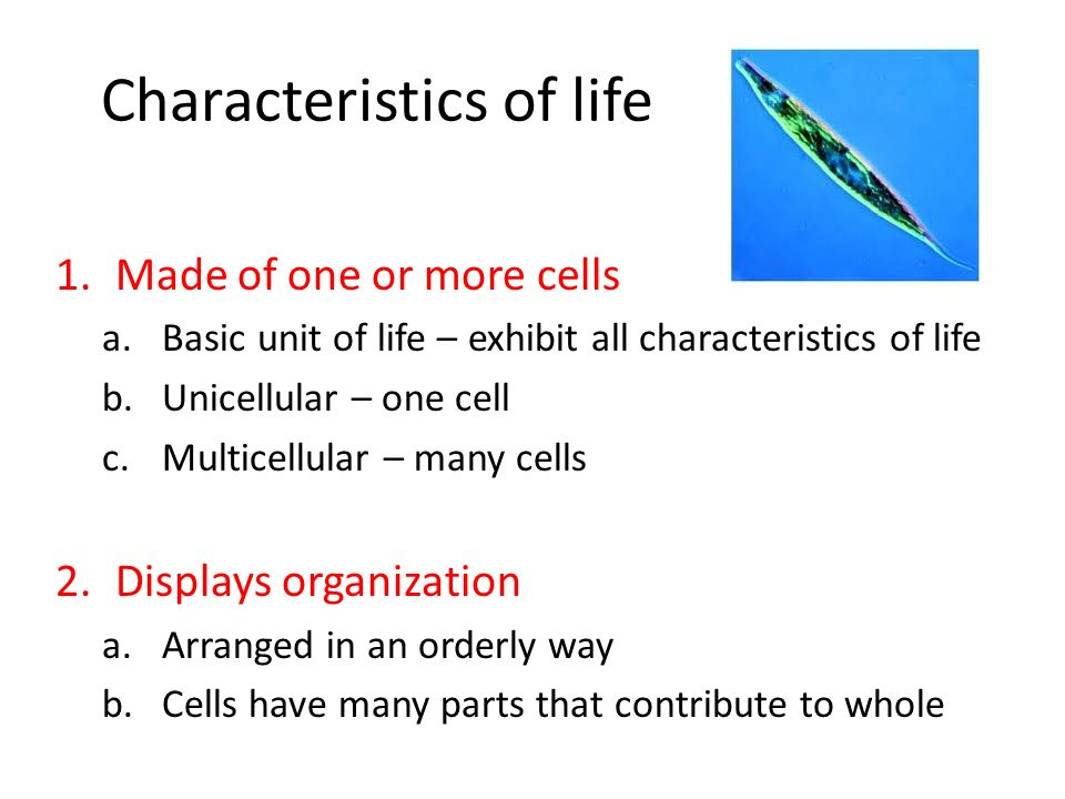 Characteristics of life 1.Made of one or more cells a.Basic unit of life – exhibit all characteristics of life b.Unicellular – one cell c.Multicellula