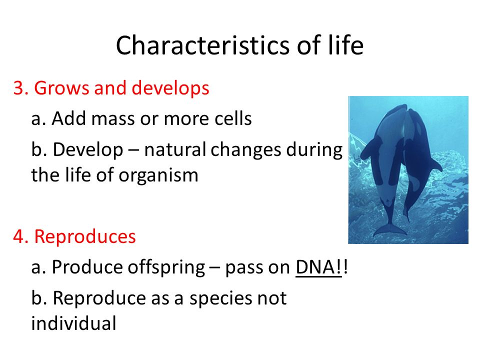 Characteristics of life 5.Responds to stimuli a. React to factors outside/inside organism b.