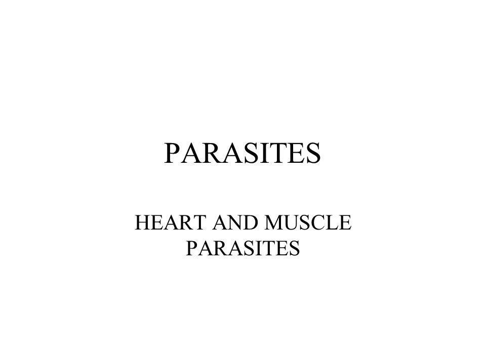 PARASITES HEART AND MUSCLE PARASITES