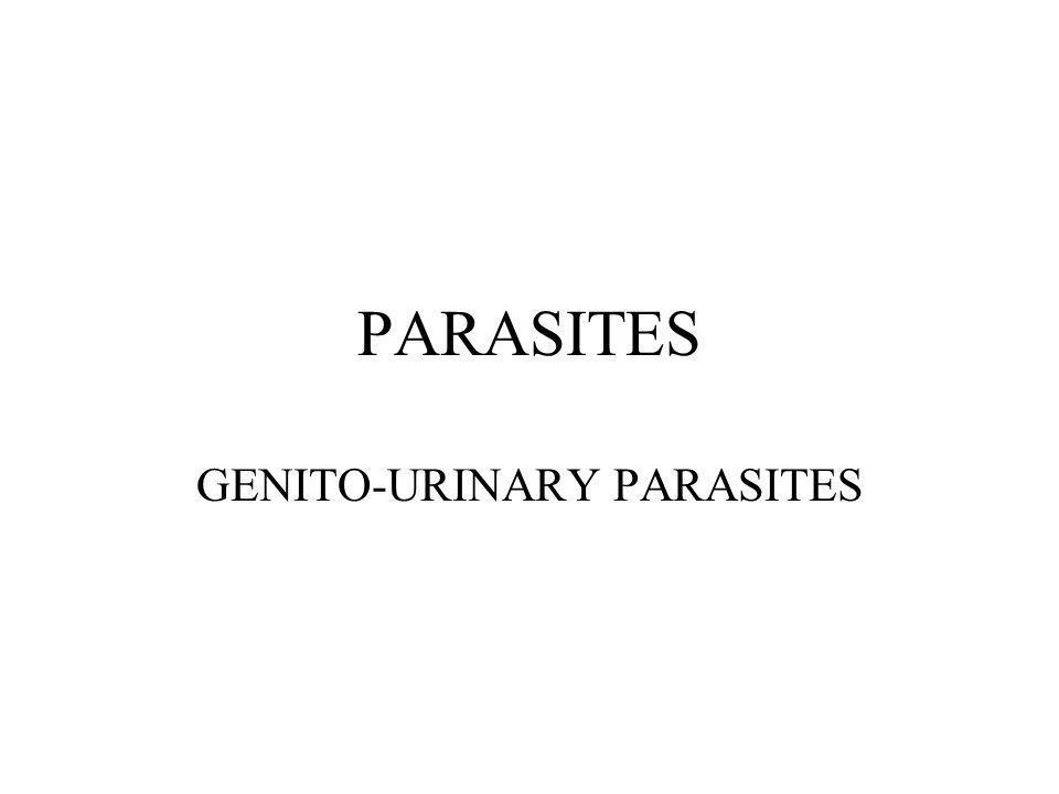 PARASITES GENITO-URINARY PARASITES