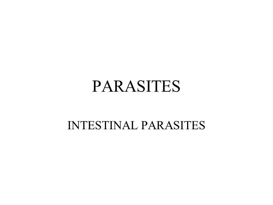 PARASITES INTESTINAL PARASITES