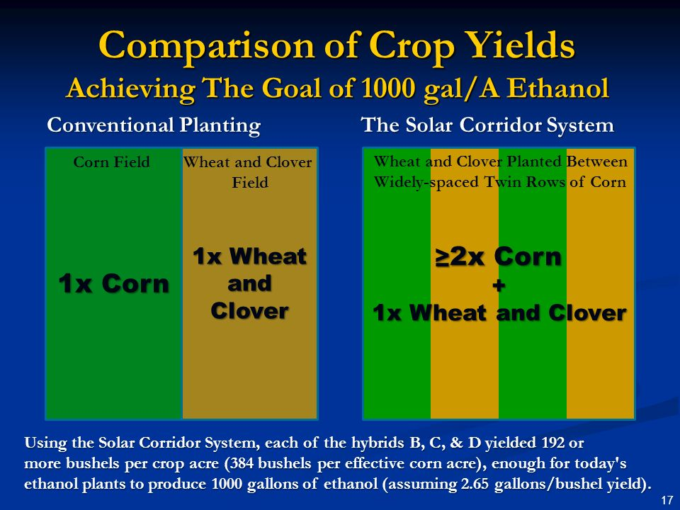 1x Wheat and Clover 1x Corn 17 2x Corn 2x Corn+ 1x Wheat and Clover Comparison of Crop Yields Achieving The Goal of 1000 gal/A Ethanol Conventional Planting The Solar Corridor System Corn FieldWheat and Clover Field Wheat and Clover Planted Between Widely-spaced Twin Rows of Corn Using the Solar Corridor System, each of the hybrids B, C, & D yielded 192 or more bushels per crop acre (384 bushels per effective corn acre), enough for today s ethanol plants to produce 1000 gallons of ethanol (assuming 2.65 gallons/bushel yield).