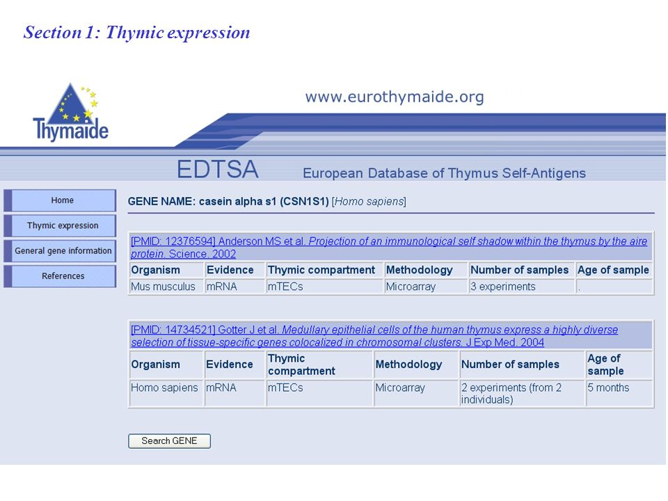 Section 1: Thymic expression