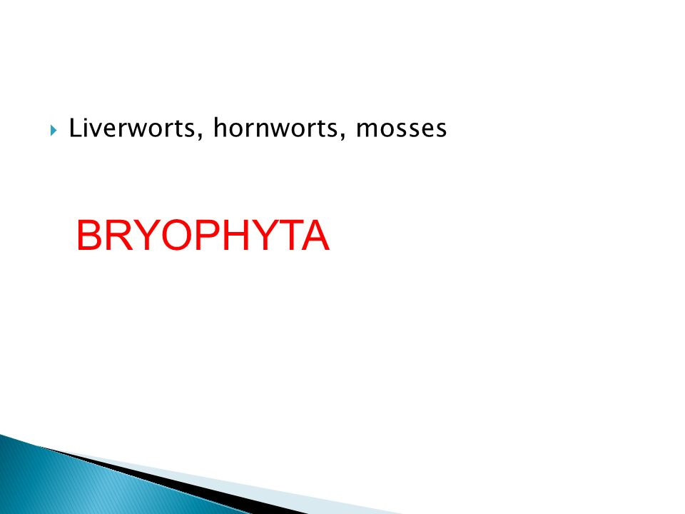 Liverworts, hornworts, mosses BRYOPHYTA
