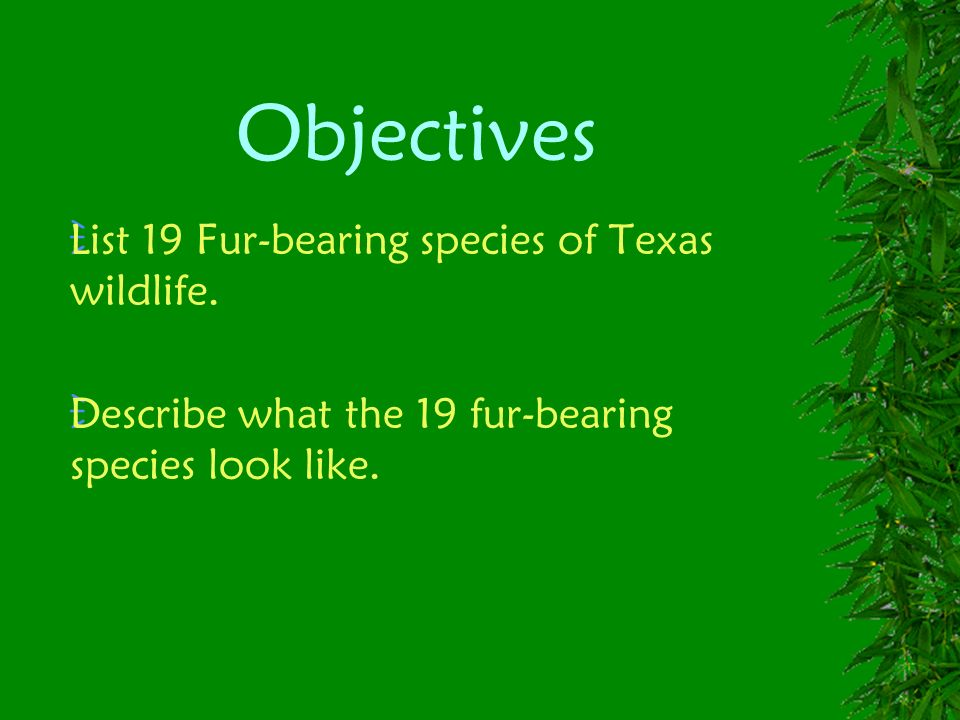 Objectives List 19 Fur-bearing species of Texas wildlife. Describe what the 19 fur-bearing species look like.
