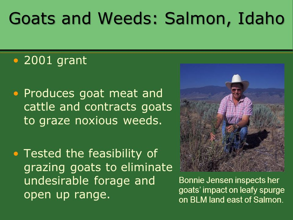 Goats and Weeds: Salmon, Idaho 2001 grant Produces goat meat and cattle and contracts goats to graze noxious weeds. Tested the feasibility of grazing