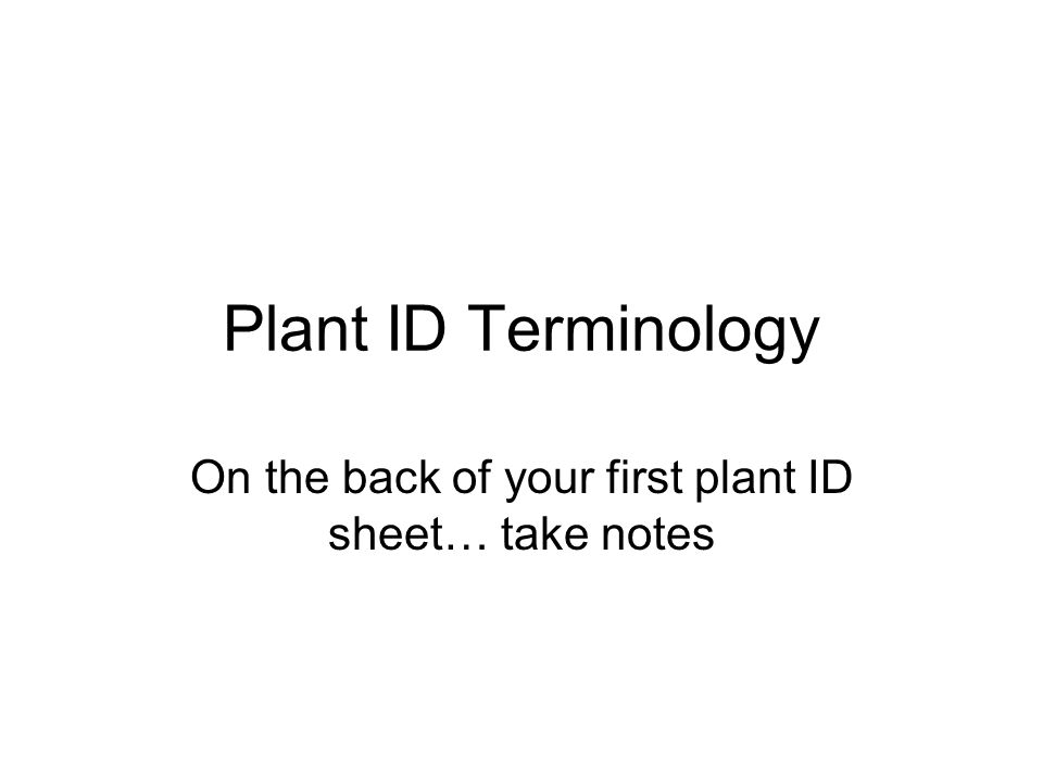 Plant ID Terminology On the back of your first plant ID sheet… take notes
