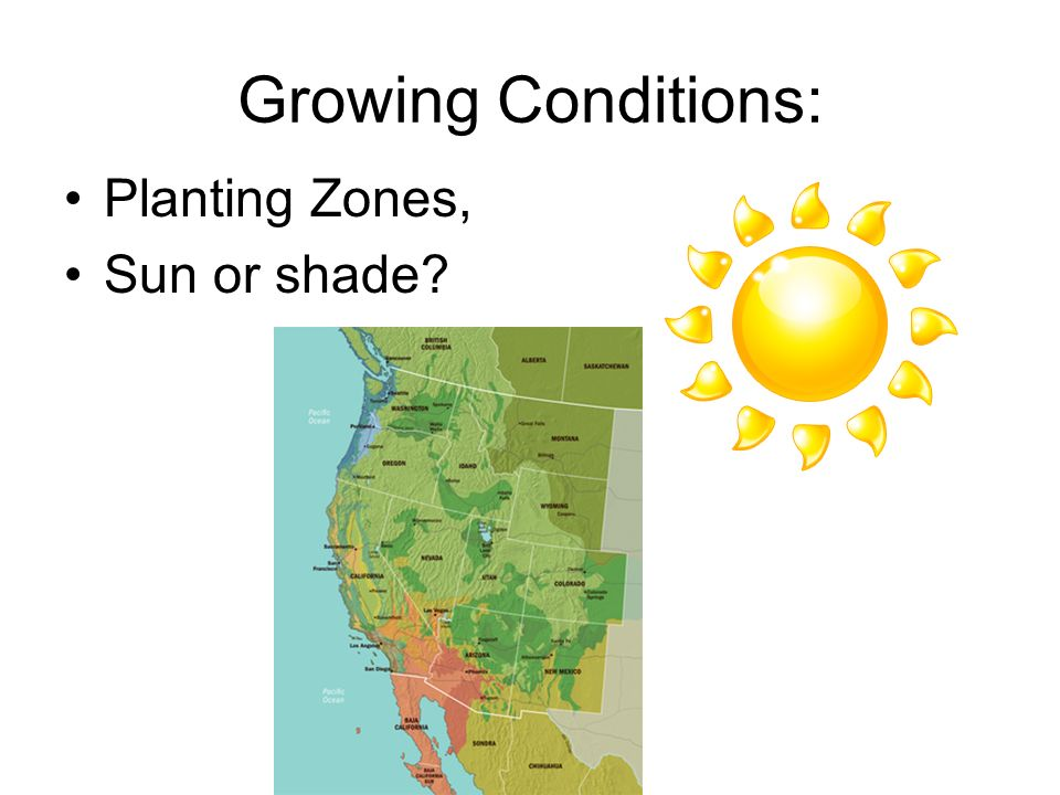 Growing Conditions: Planting Zones, Sun or shade?