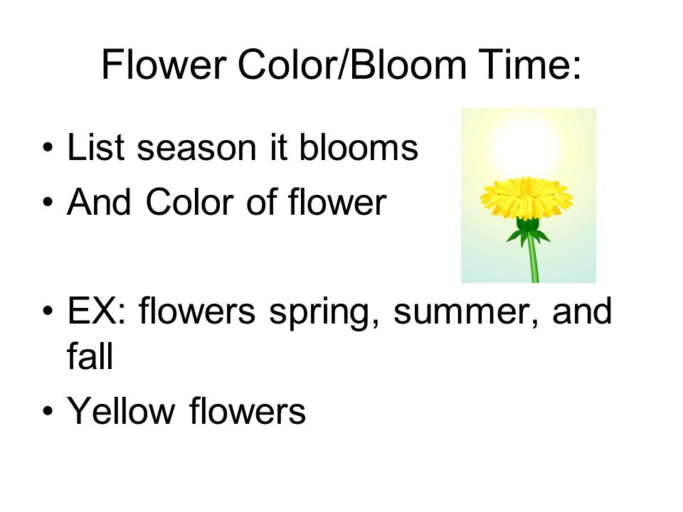 Flower Color/Bloom Time: List season it blooms And Color of flower EX: flowers spring, summer, and fall Yellow flowers