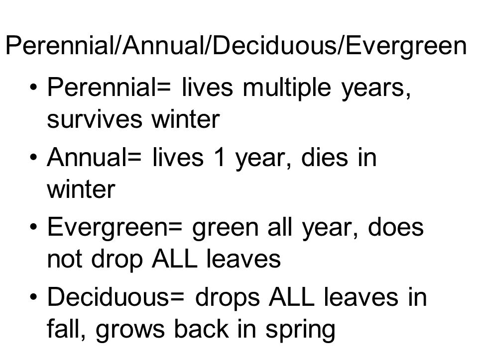 Perennial/Annual/Deciduous/Evergreen Perennial= lives multiple years, survives winter Annual= lives 1 year, dies in winter Evergreen= green all year,