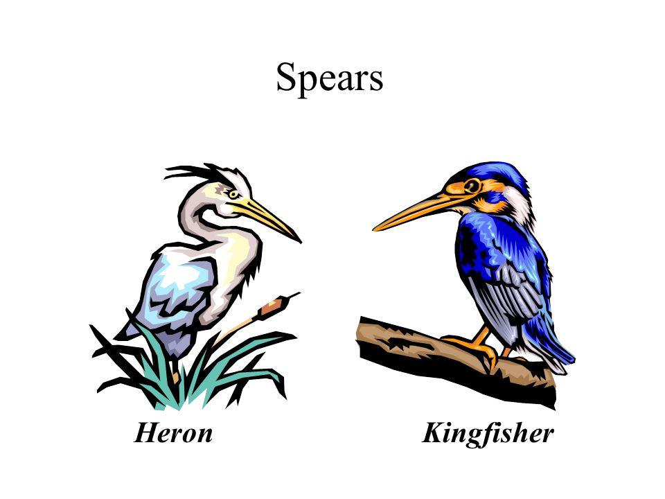 Spears HeronKingfisher