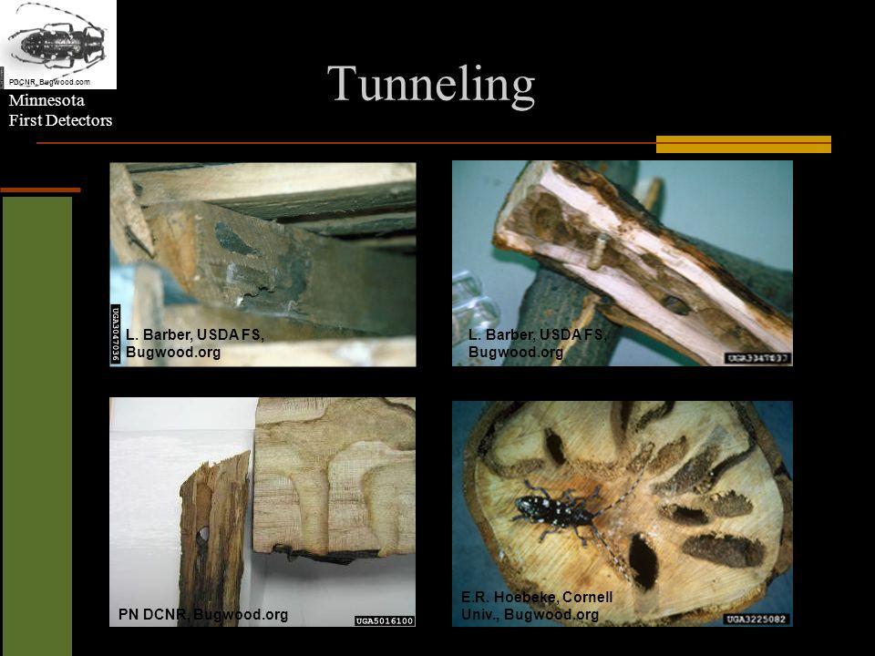 Minnesota First Detectors Tunneling L. Barber, USDA FS, Bugwood.org E.R.