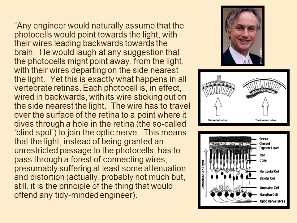Any engineer would naturally assume that the photocells would point towards the light, with their wires leading backwards towards the brain. He would