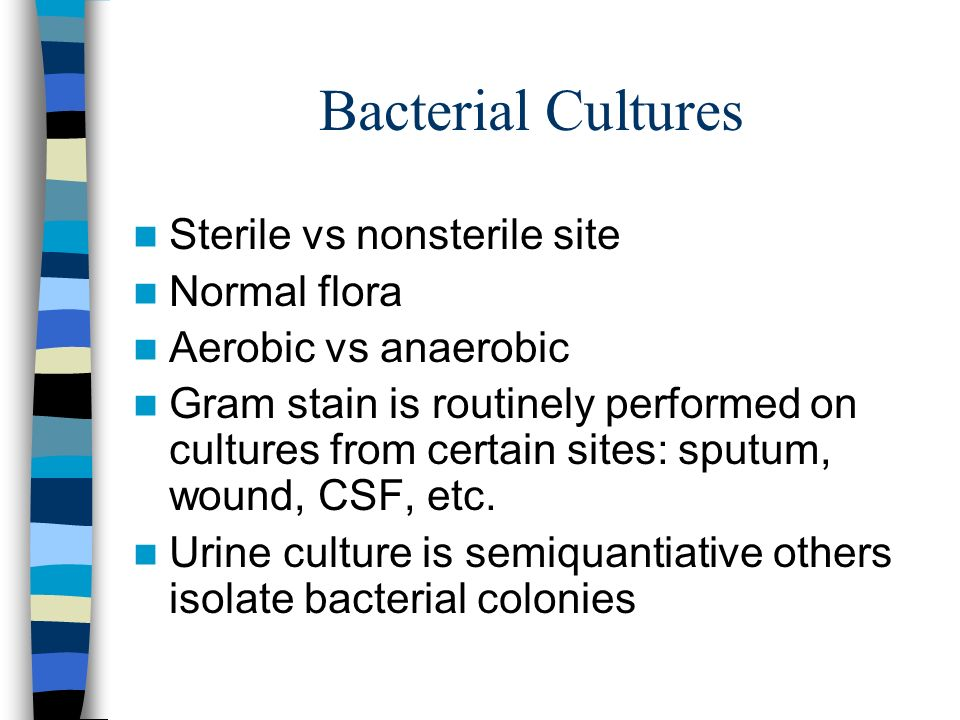Bacterial Cultures Sterile vs nonsterile site Normal flora Aerobic vs anaerobic Gram stain is routinely performed on cultures from certain sites: sput
