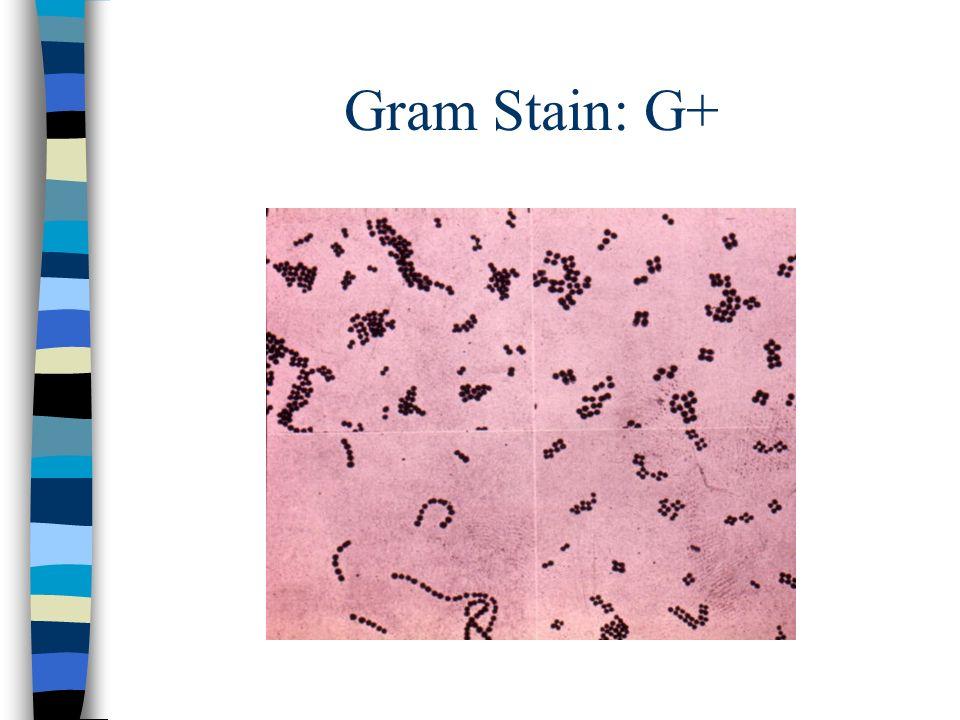 Gram Stain: G+