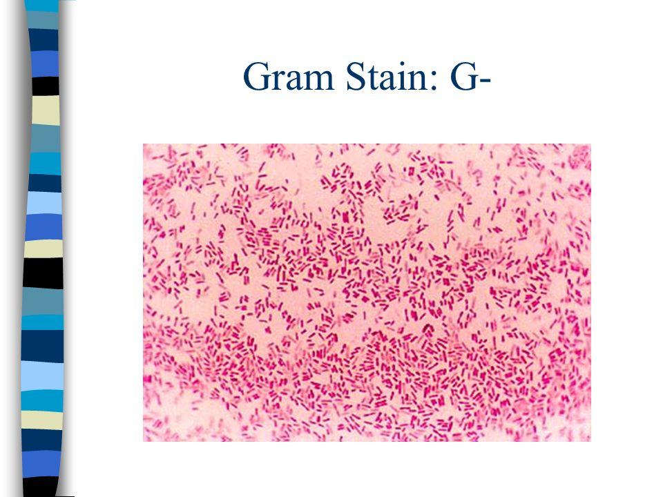 Gram Stain: G-