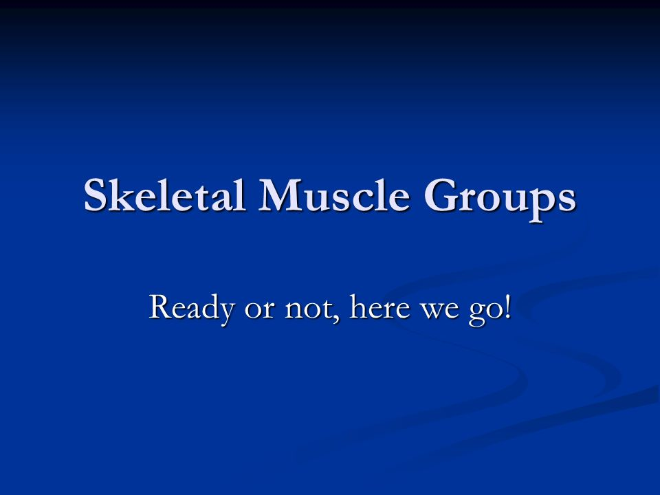 Skeletal Muscle Groups Ready or not, here we go!
