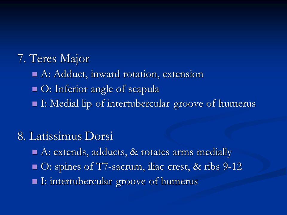 7. Teres Major A: Adduct, inward rotation, extension A: Adduct, inward rotation, extension O: Inferior angle of scapula O: Inferior angle of scapula I