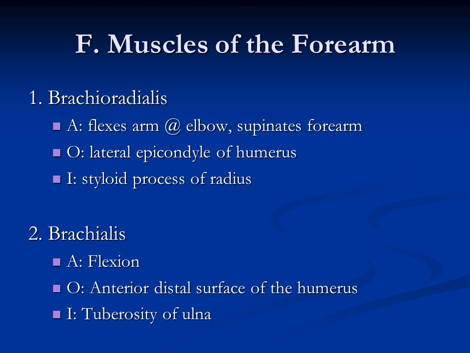 F. Muscles of the Forearm 1. Brachioradialis A: flexes arm @ elbow, supinates forearm A: flexes arm @ elbow, supinates forearm O: lateral epicondyle o