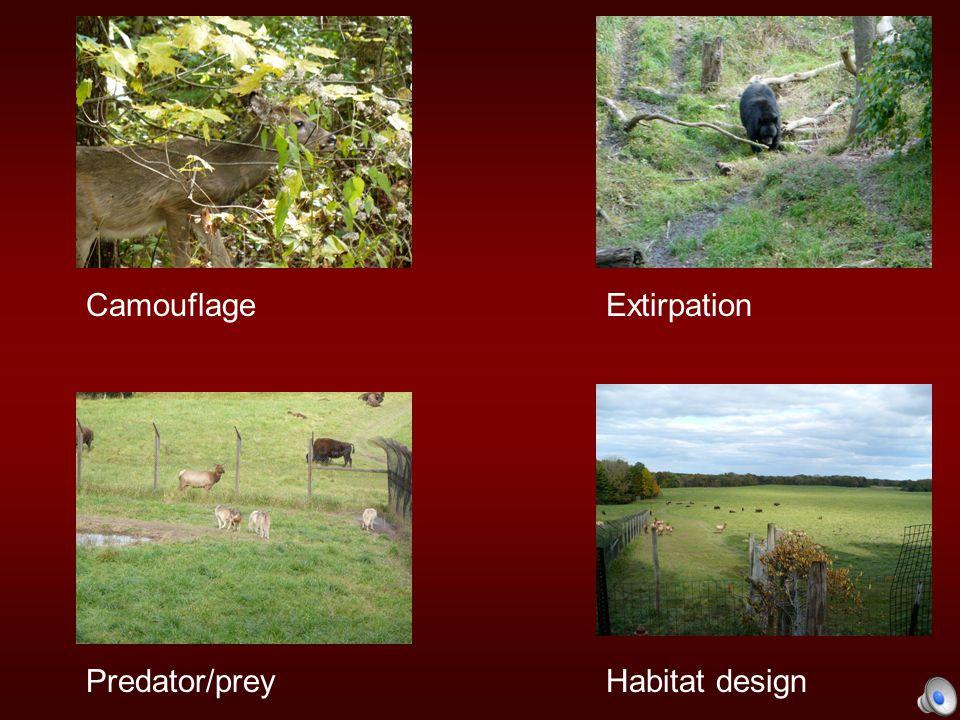 CamouflageExtirpation Habitat designPredator/prey