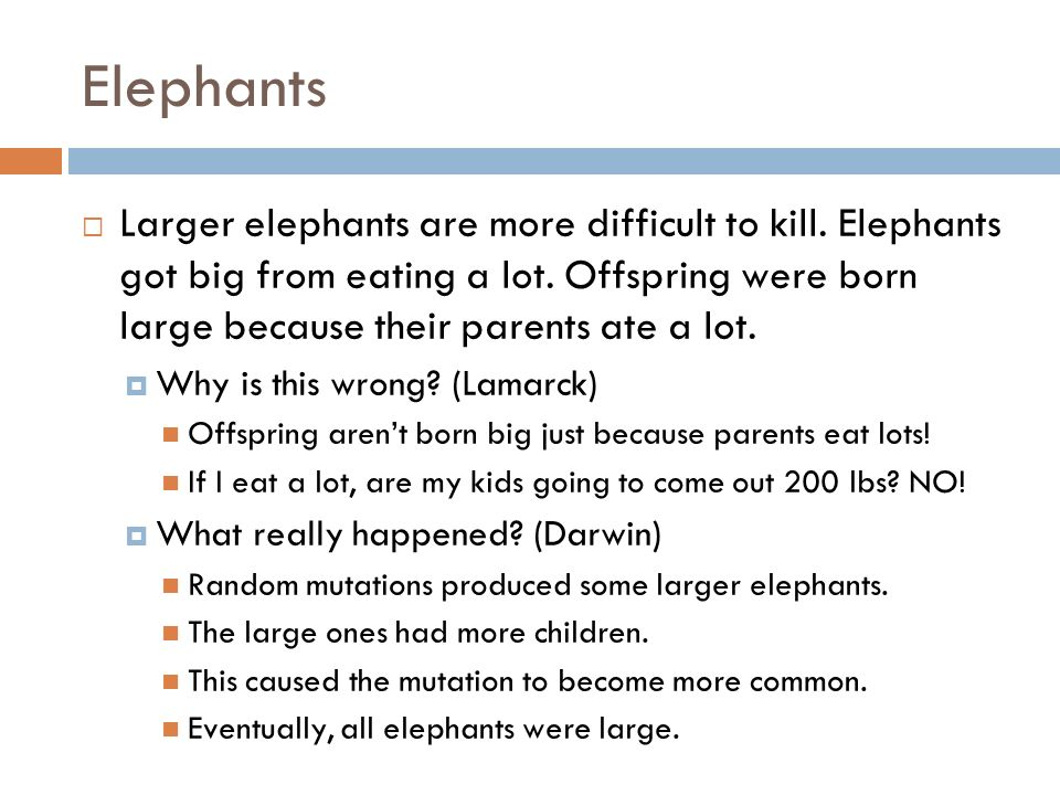 Elephants Larger elephants are more difficult to kill. Elephants got big from eating a lot. Offspring were born large because their parents ate a lot.