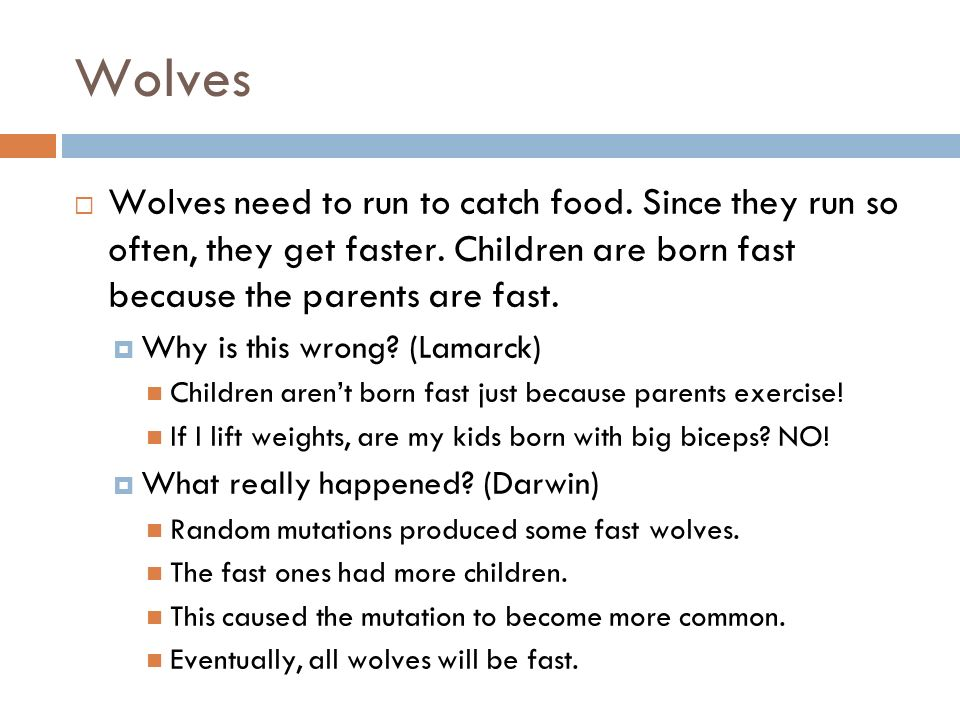 Wolves Wolves need to run to catch food. Since they run so often, they get faster.