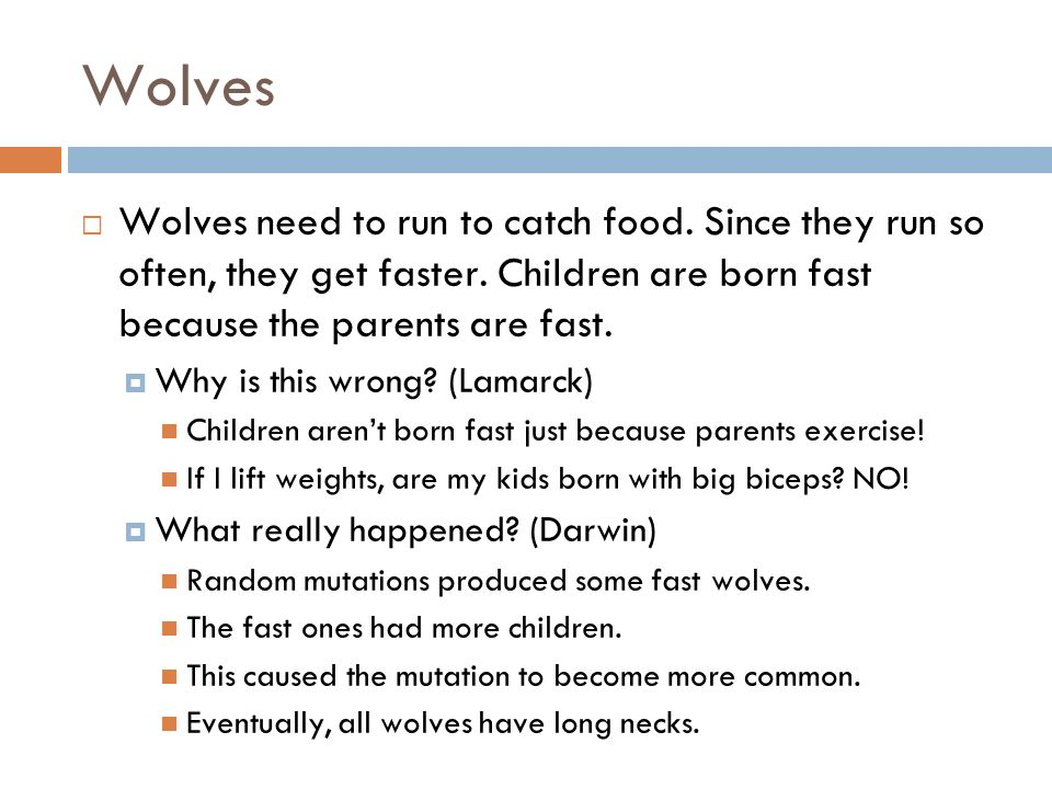 Wolves Wolves need to run to catch food. Since they run so often, they get faster. Children are born fast because the parents are fast. Why is this wr