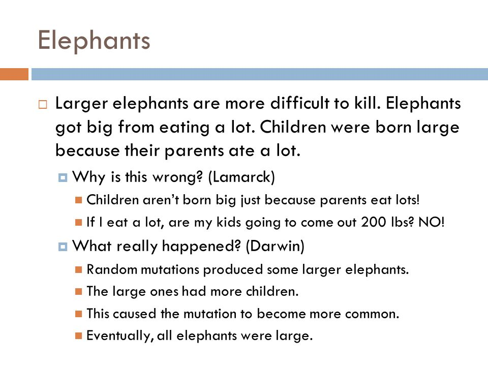 Elephants Larger elephants are more difficult to kill. Elephants got big from eating a lot. Children were born large because their parents ate a lot.