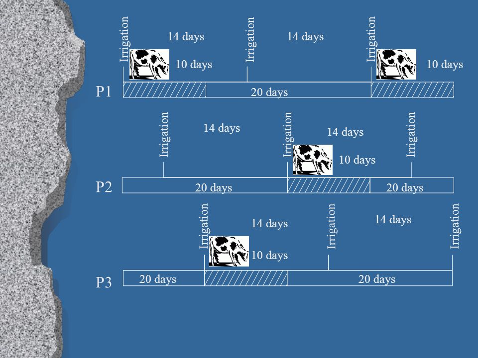 P1 P2 P3 Irrigation 10 days 20 days 14 days 20 days 14 days 10 days