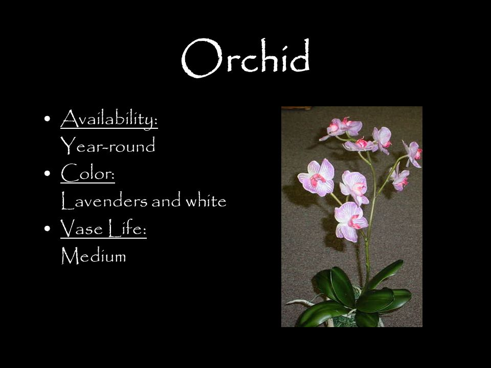Orchid Availability: Year-round Color: Lavenders and white Vase Life: Medium