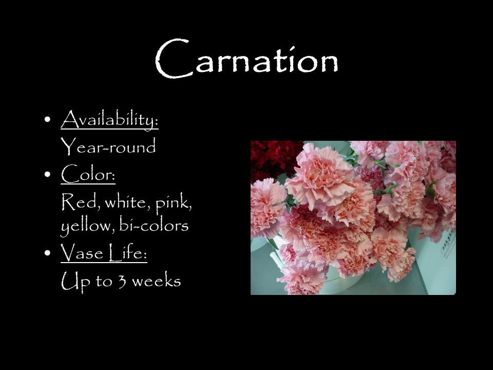 Carnation Availability: Year-round Color: Red, white, pink, yellow, bi-colors Vase Life: Up to 3 weeks
