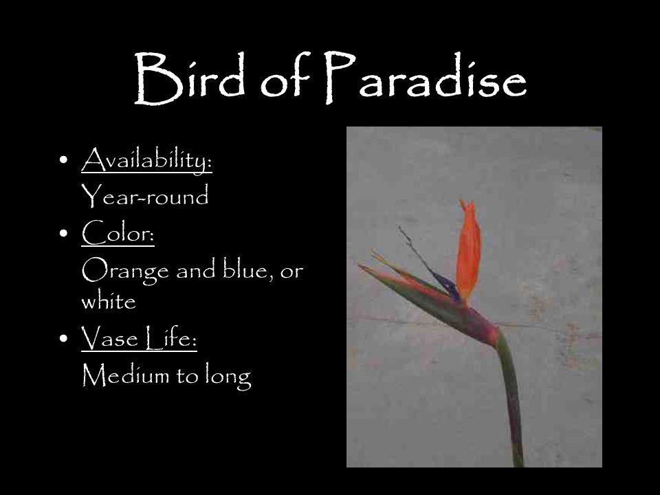 Bird of Paradise Availability: Year-round Color: Orange and blue, or white Vase Life: Medium to long