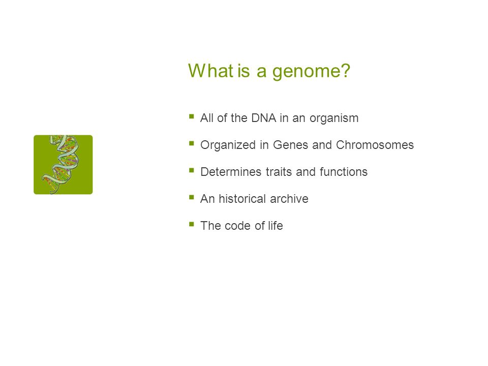 What is a genome? All of the DNA in an organism Organized in Genes and Chromosomes Determines traits and functions An historical archive The code of l