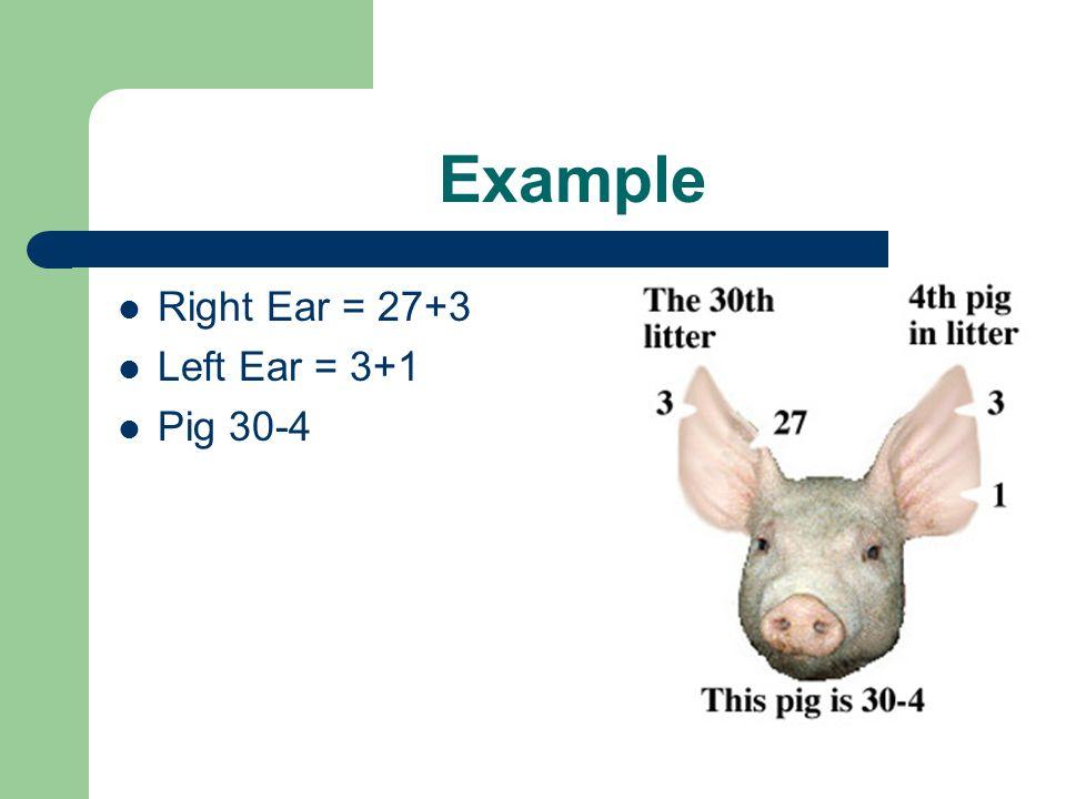 Example Right Ear = 27+3 Left Ear = 3+1 Pig 30-4