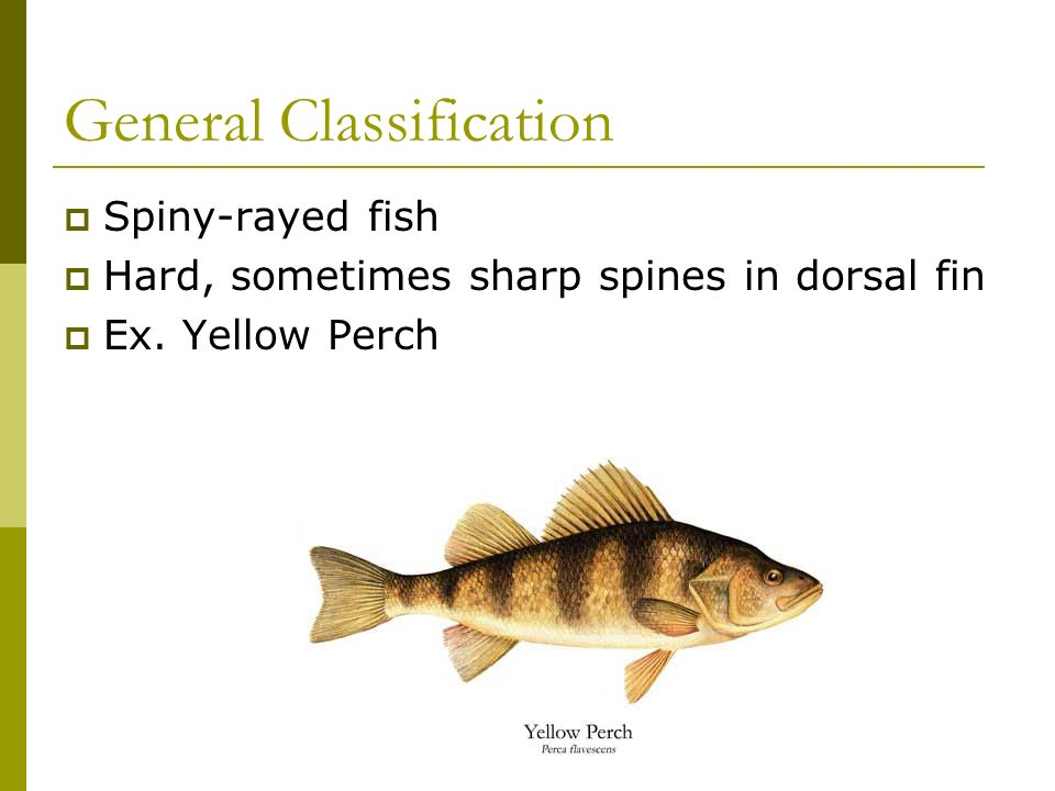 Pennsylvania Fish Species 160 Native to PA Study of fish biology: Ichthyology